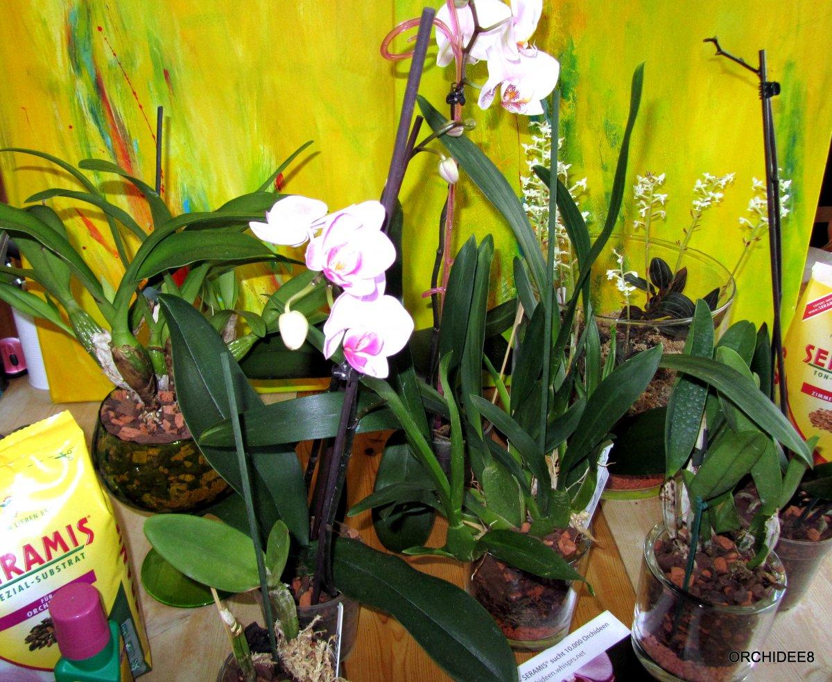 5101_1_1299095365_Orchideen8_IMG_0119-2