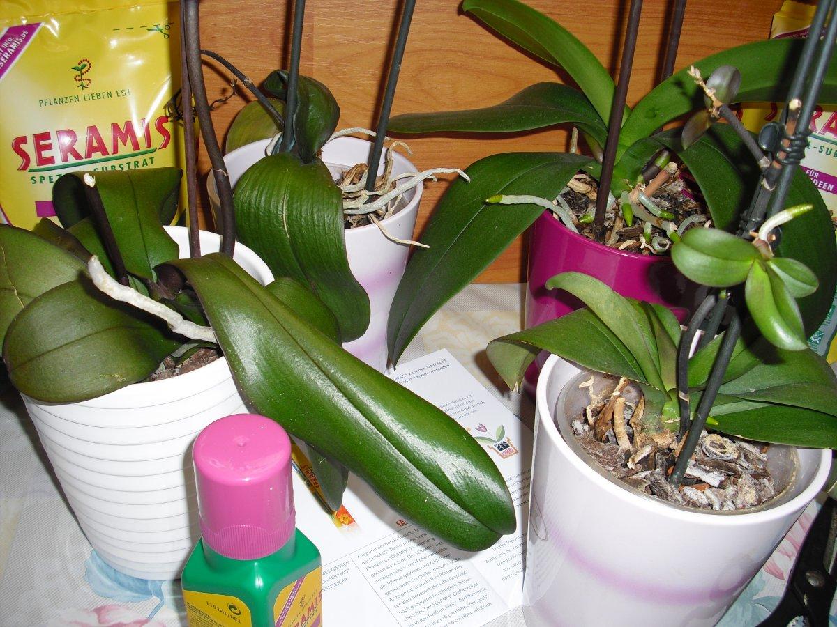 5101_1_1301329116_sabtei_orchideen 001