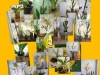 5101_1_1298475014_zauberbluete_Whisprs OrchideenDoku