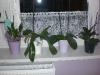 5101_1_1298499540_marzie_Orchideen 23.02.11