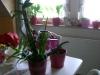 5101_1_1298921106_baligirl_oberammergau und orchideen 217