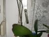 5101_1_1298921106_baligirl_oberammergau und orchideen 224