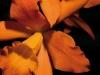 orchidee_seite17