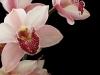 orchidee_seite18