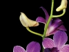 orchidee_seite22