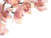 orchidee_seite9