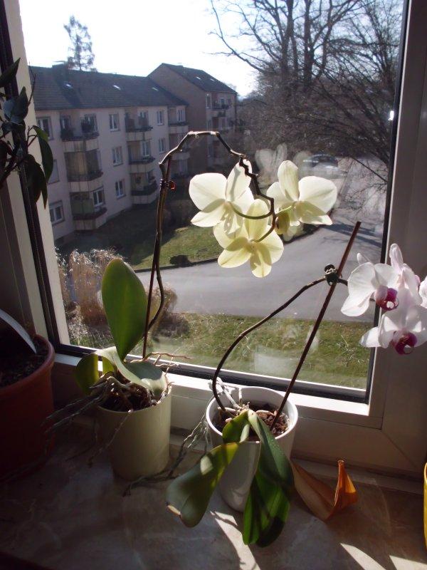 5126_1_1365843912_angel4041_Orchidee 4 klein