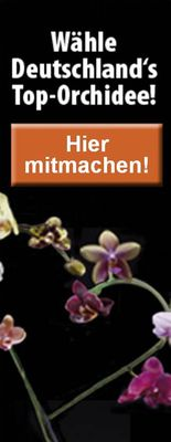 Top-Orchidee