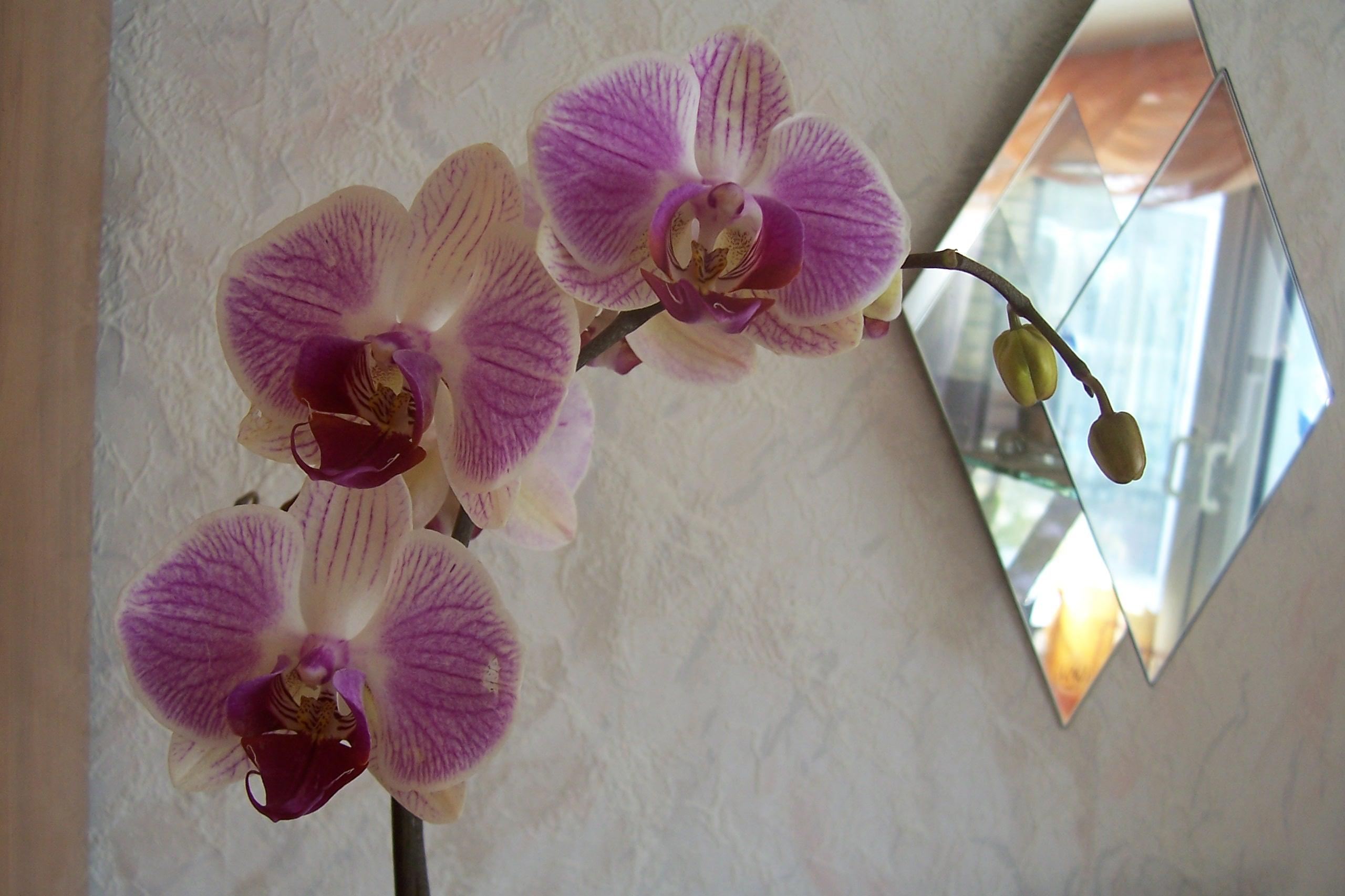 pro_seramisd_christa-60_ja_2010-02-17-17_07_21_orchideen-002