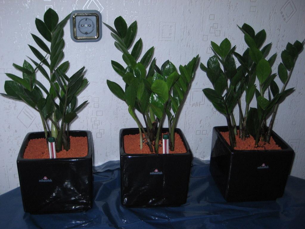 pro_seramisd_mel-04_ja_2010-02-04-12_18_20_orchideen-001