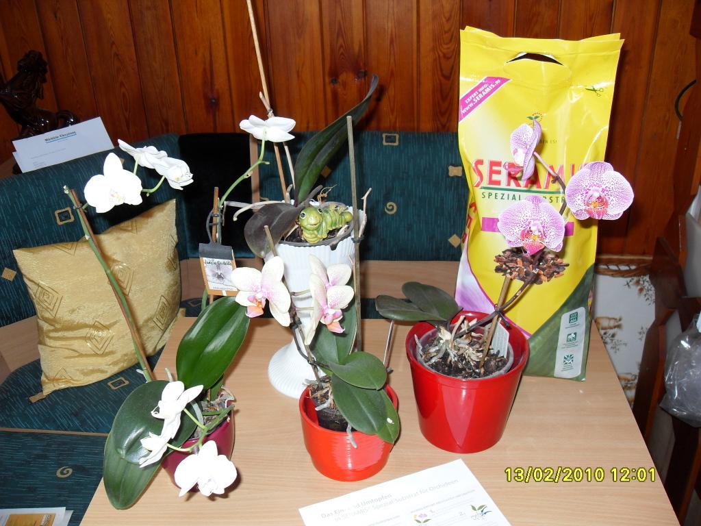 pro_seramisd_putzi999_ja_2010-02-13-14_40_32_seramis-fur-orchideen-005