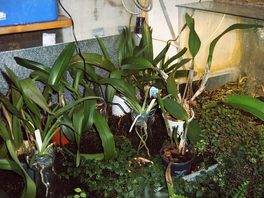 pro_seramisd_scholli-60_ja_2010-02-02-15_43_03_gewachshaus-mit-orchideen-1